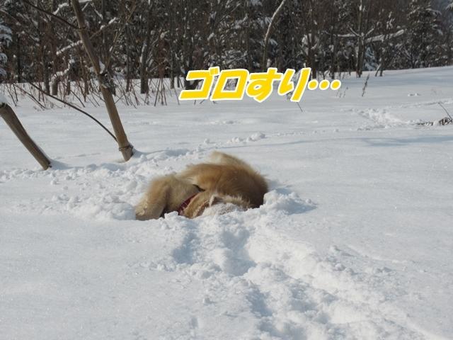 久しぶりの新雪♪IMG_6116