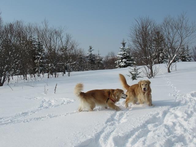 久しぶりの新雪♪IMG_6137