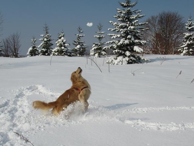 久しぶりの新雪♪IMG_6153