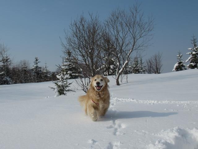 久しぶりの新雪♪IMG_6157