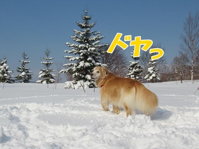 久しぶりの新雪♪IMG_6192