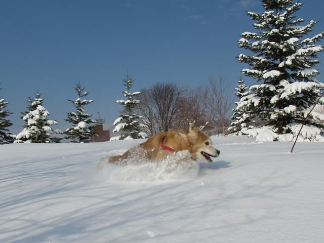 久しぶりの新雪♪IMG_6228
