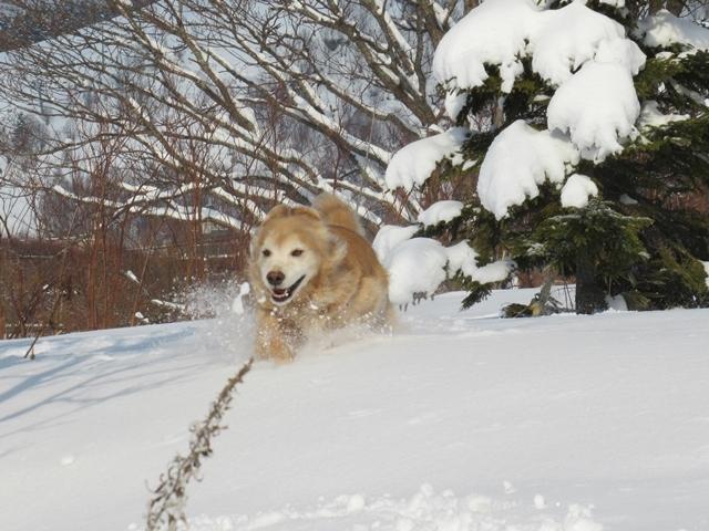 久しぶりの新雪♪IMG_6255