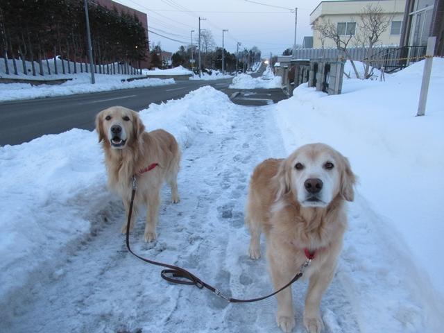 久しぶりの新雪♪IMG_6308