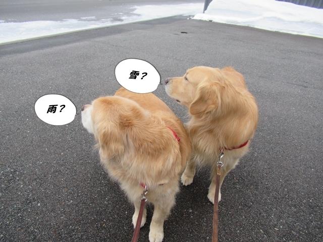 釧路産ひめたらIMG_6339