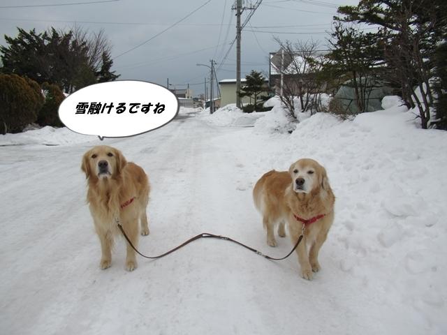 釧路産ひめたらIMG_6344