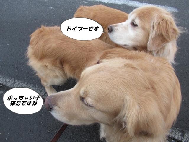 釧路産ひめたらIMG_6357