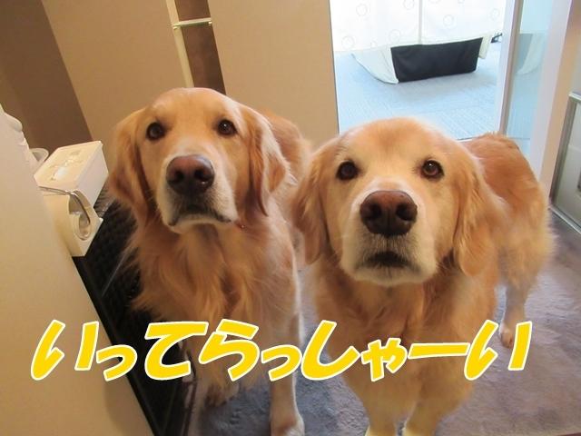 釧路産ひめたらIMG_6374