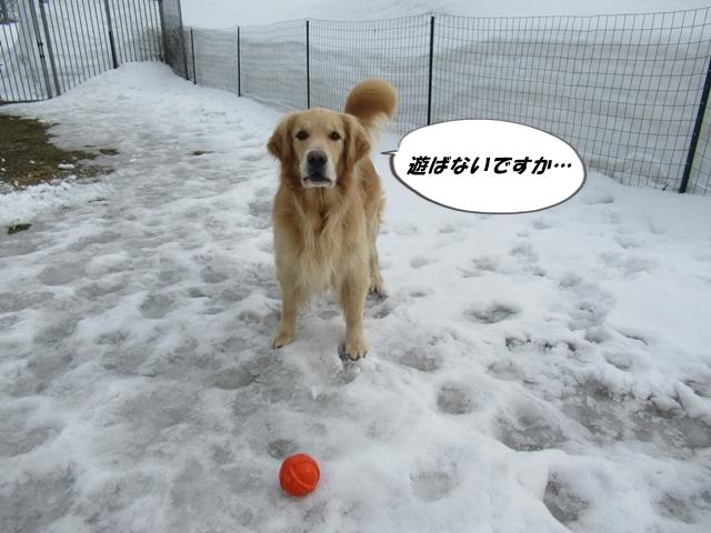 釧路産ひめたらIMG_6376
