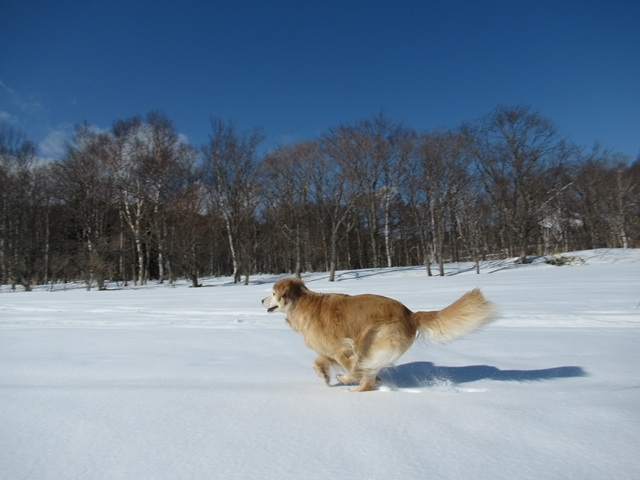 青い空~白い雪~IMG_6510