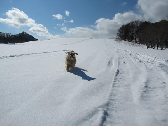 青い空~白い雪~IMG_6515