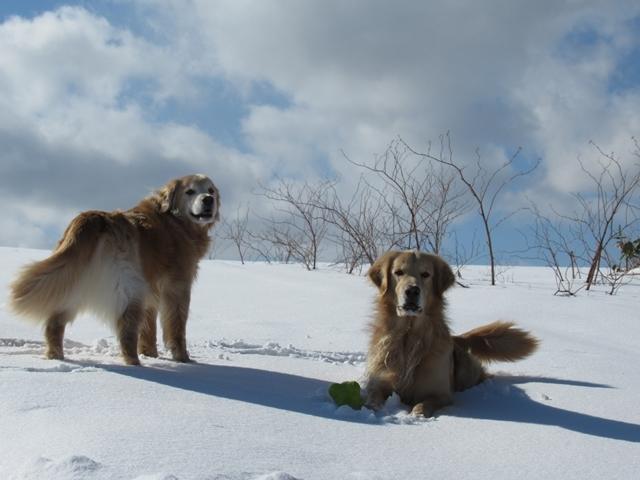 青い空~白い雪~IMG_6529