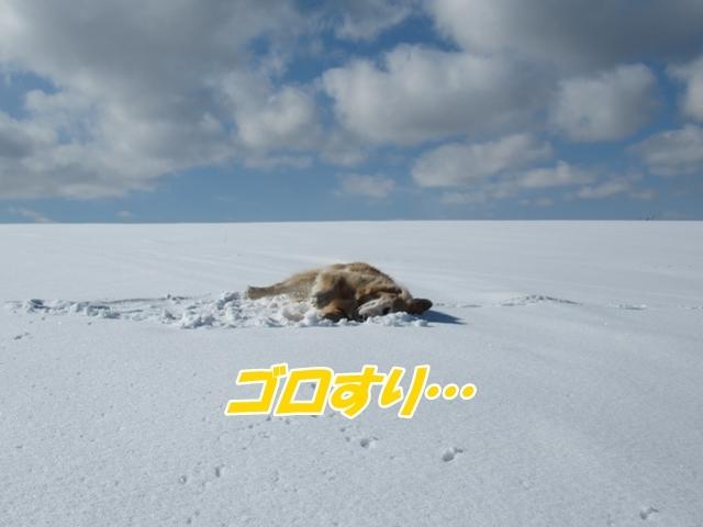 青い空~白い雪~IMG_6549