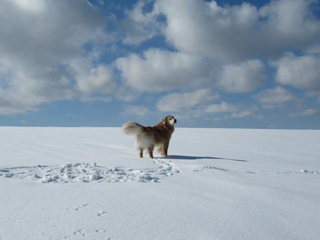 青い空~白い雪~IMG_6553