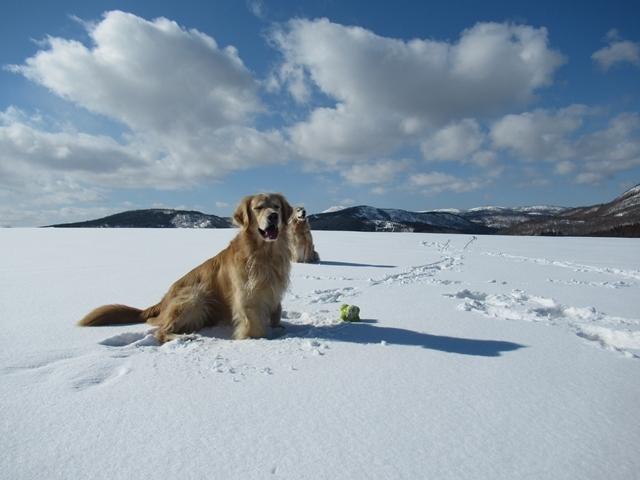 青い空~白い雪~IMG_6592