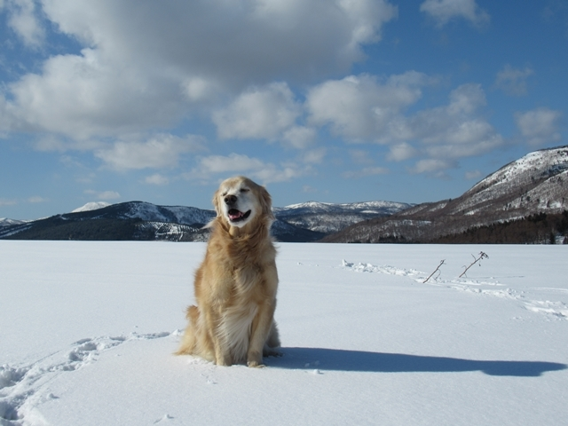 青い空~白い雪~IMG_6600