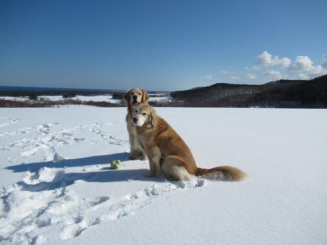 青い空~白い雪~IMG_6605