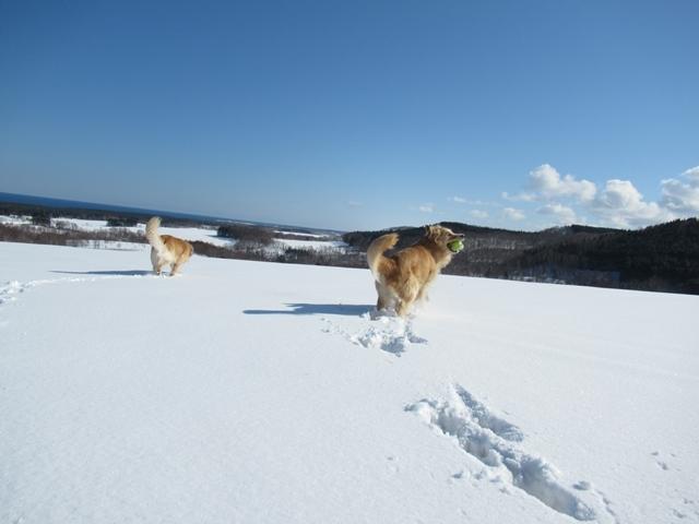 青い空~白い雪~IMG_6611