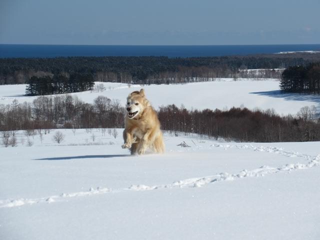 青い空~白い雪~IMG_6614