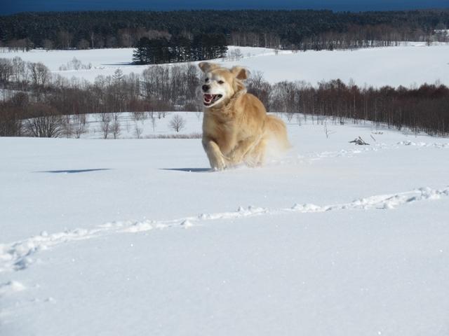 青い空~白い雪~IMG_6616