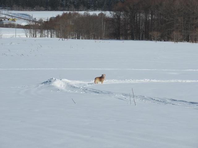 青い空~白い雪~IMG_6658