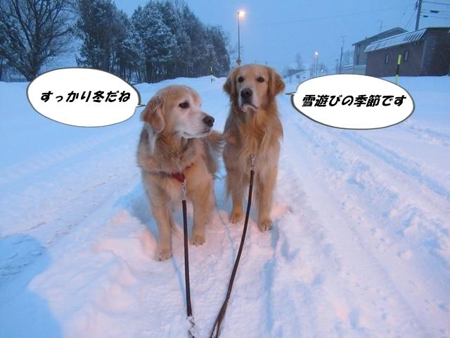 冬に逆戻り~IMG_7311