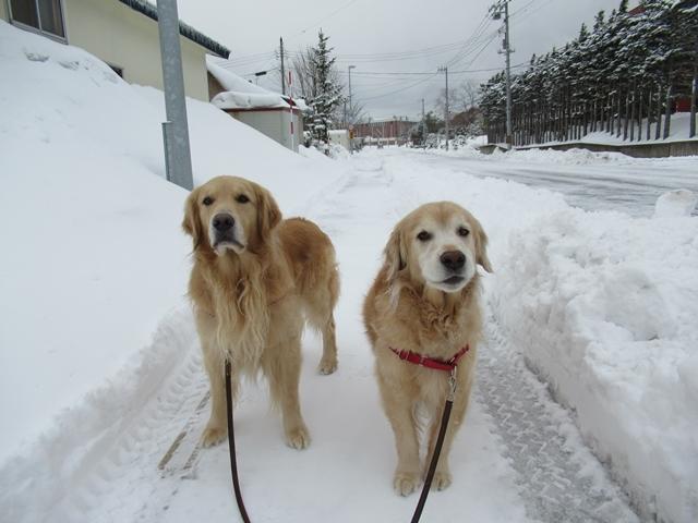 やっぱり雪があるとうれしいヴェルヴィオIMG_7544