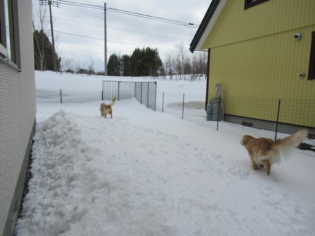 やっぱり雪があるとうれしいヴェルヴィオIMG_7595
