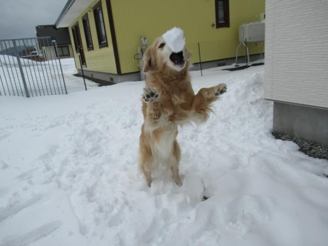 やっぱり雪があるとうれしいヴェルヴィオIMG_7606