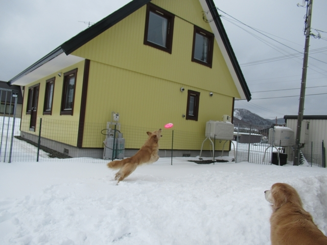 やっぱり雪があるとうれしいヴェルヴィオIMG_7608