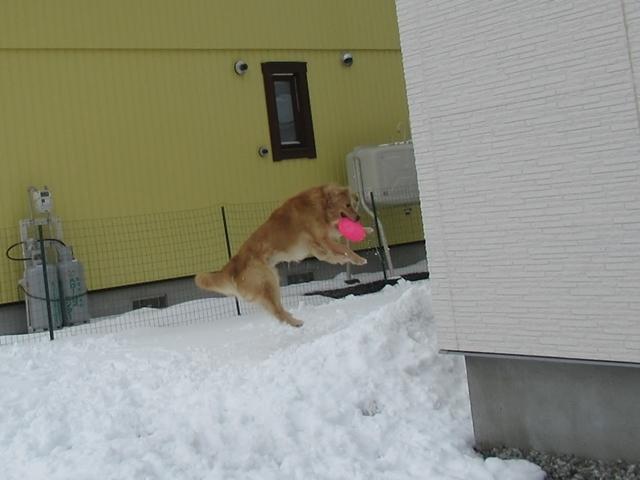 やっぱり雪があるとうれしいヴェルヴィオIMG_7610