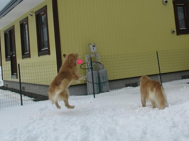 やっぱり雪があるとうれしいヴェルヴィオIMG_7622