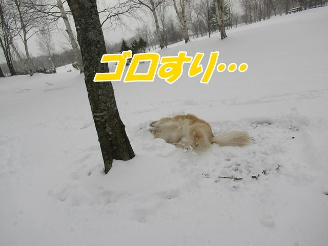 IMG_9682.jpg