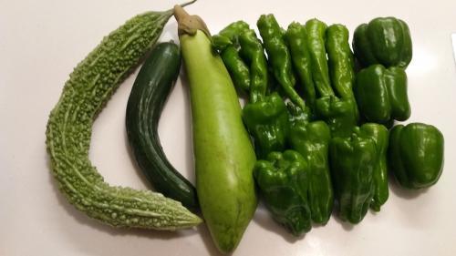 大量収穫も夏野菜終盤?