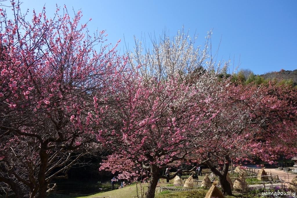 白野江植物公園 DSC01238A
