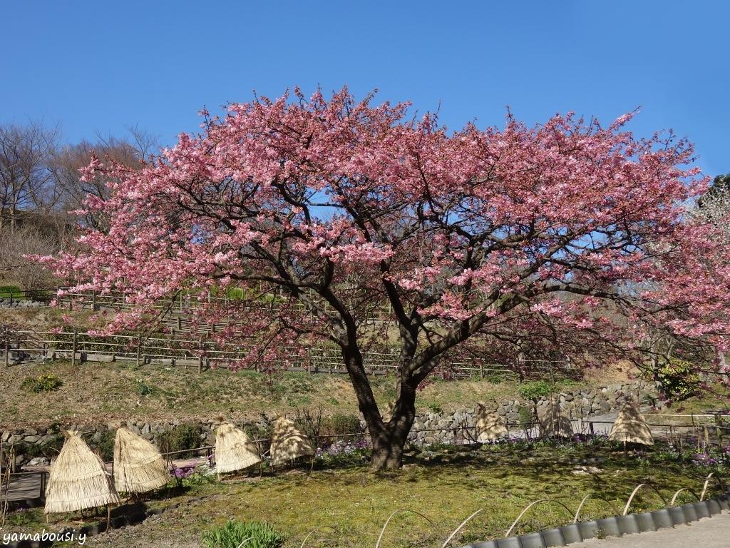 白野江植物公園 DSC01315