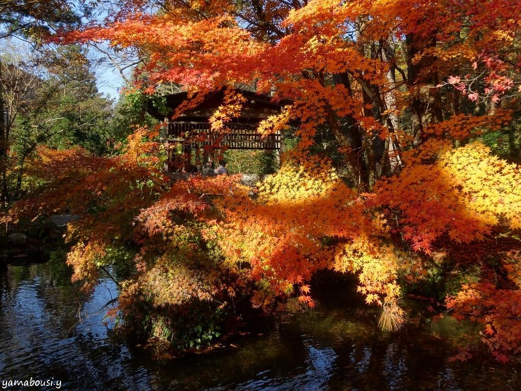 鶴仙渓の紅葉 DSC06235