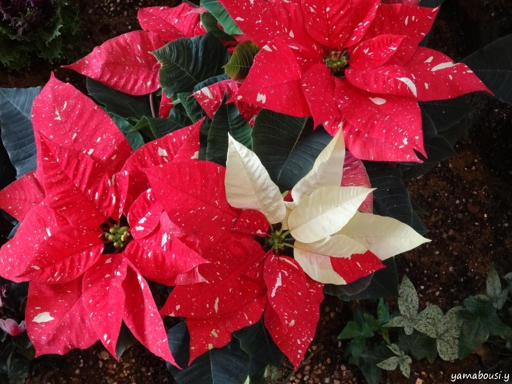 クリスマス DSC06267