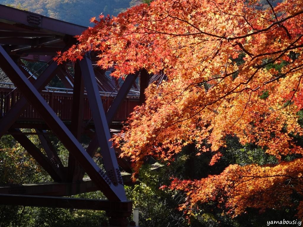 鶴仙渓の紅葉 DSC08824