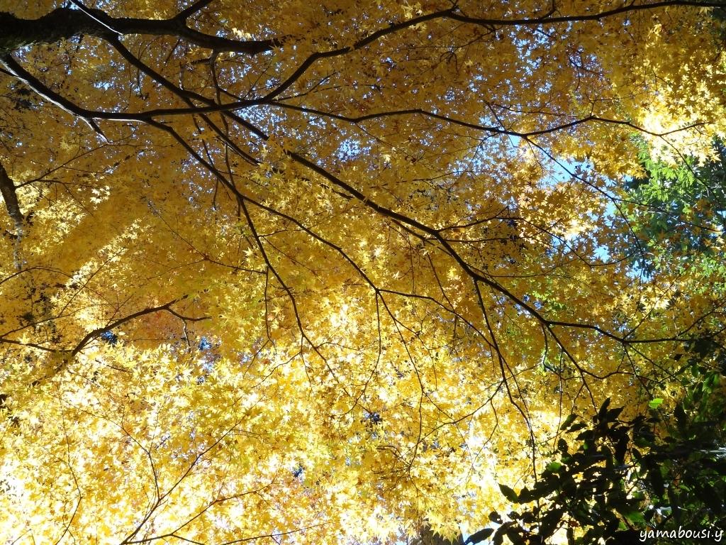 鶴仙渓の紅葉 DSC08834