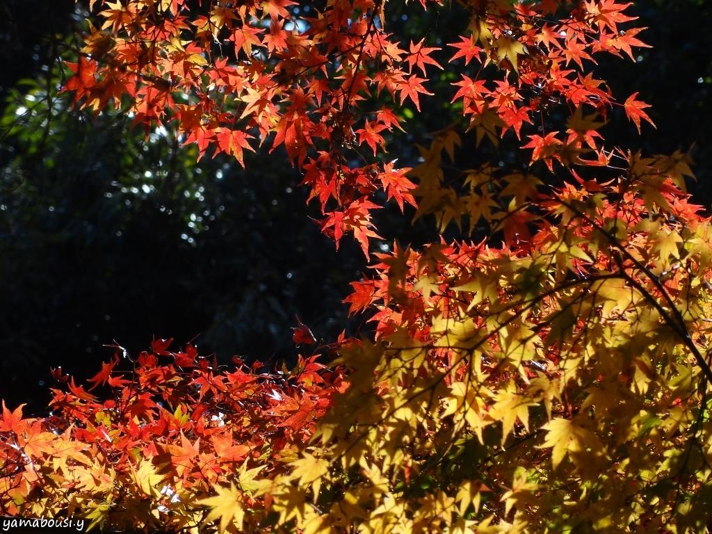 白野江植物公園 DSC09746