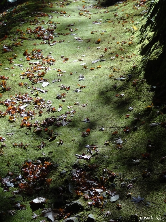 白野江植物公園 DSC09762