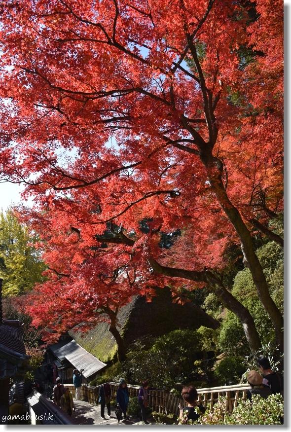 大興善寺(2019)紅葉の彩 2
