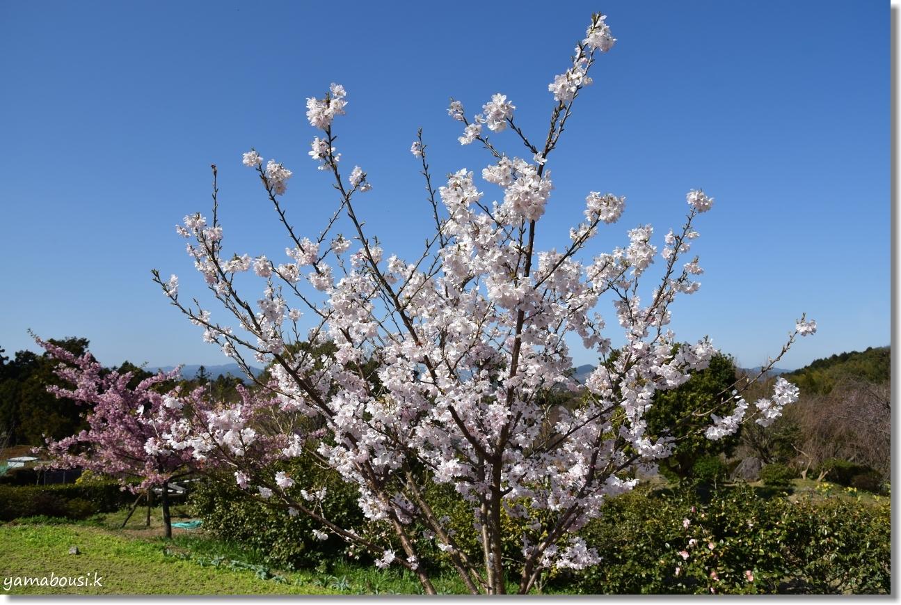心ときめく早春の花々 2