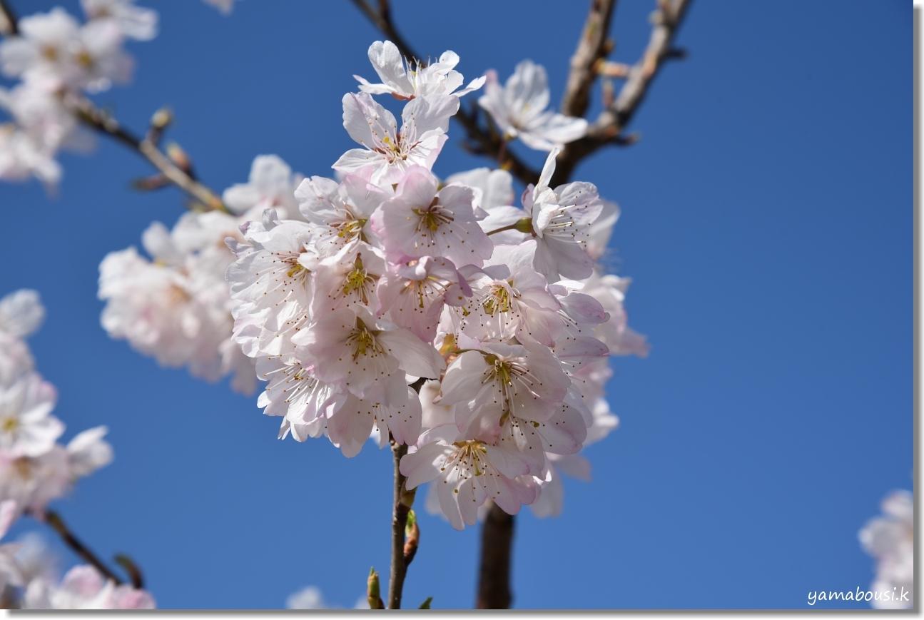 心ときめく早春の花々 1