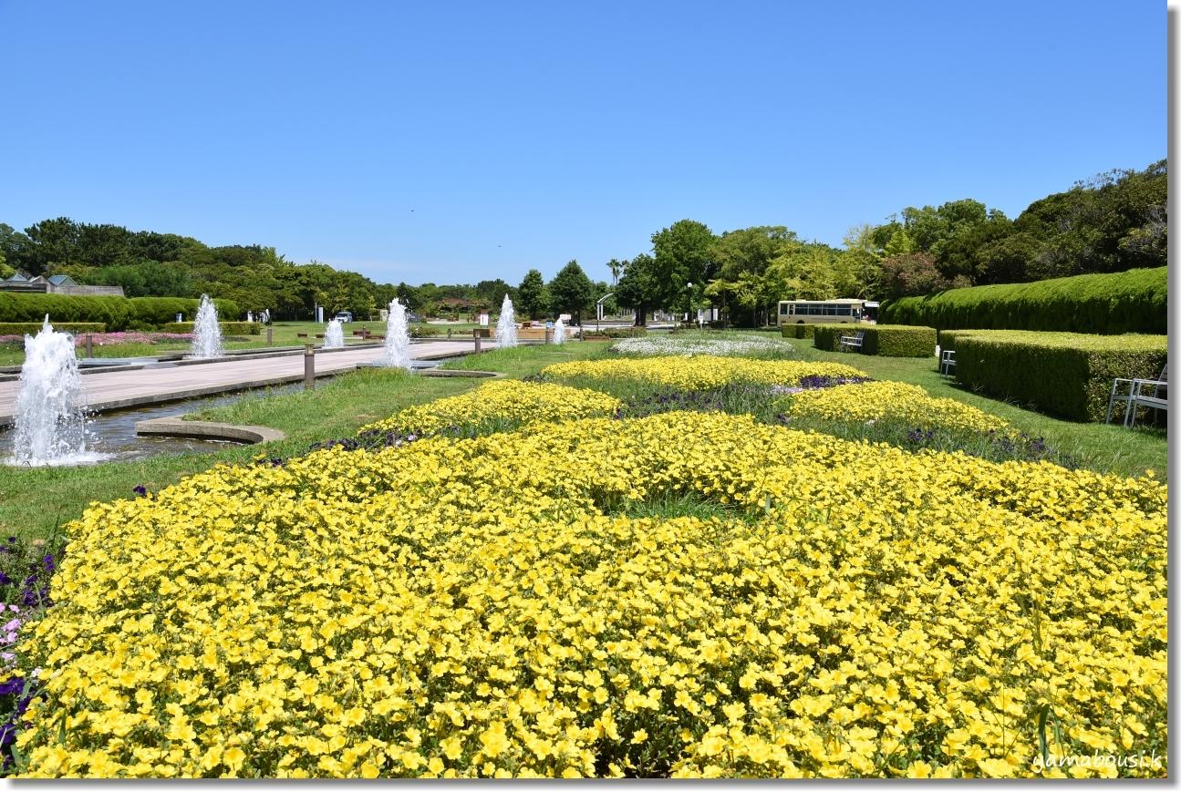うみなか 夏の花 ポーチュラカ 5