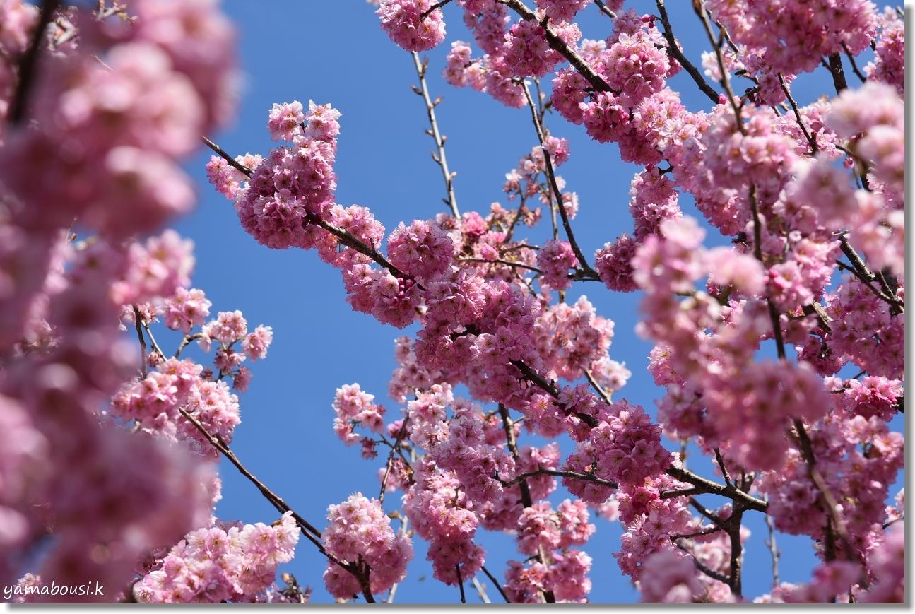 心ときめく早春の花々 4