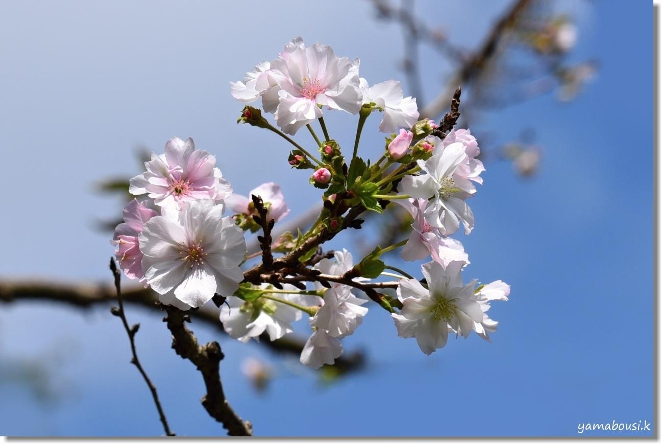 白野江植物公園 初秋の花々 1