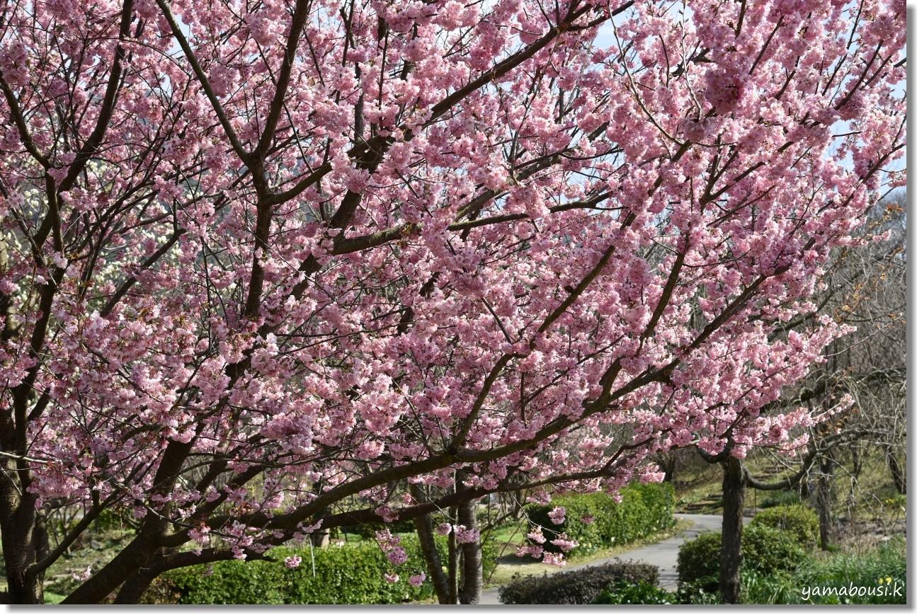 福智山ろく花公園 早春の候 1