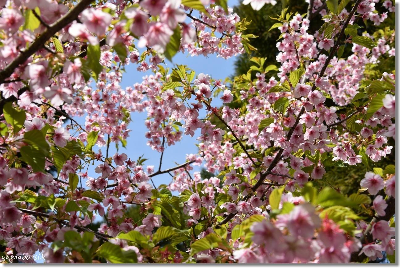 福智山ろく花公園 早春の候 4